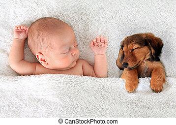 Sleeping baby and puppy - Newborn baby and a dachshund puppy...