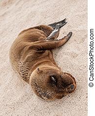 Sleeping Baby Sea Lion