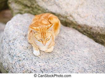 Sleeping cat on the rock