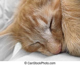 sleeping cat portrait