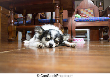 Sleeping chihuahua in wooden house