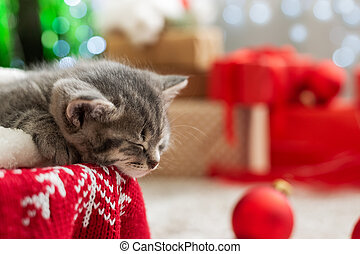 Sleeping Christmas kitten. Adorable little tabby sleeping kitten, kitty, cat on red knitted plaid under christmas tree with blurry festive decor. Cozy home. Animal, pet, cat. Close up, copy space