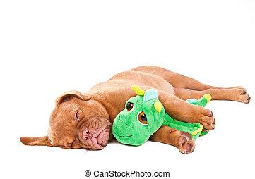 sleeping  dog - cute puppy sleeping with its Nessy