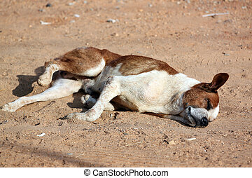 Sleeping Dog on the ground.