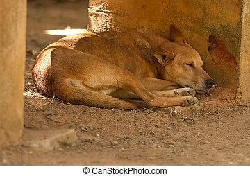 Sleeping feral dog