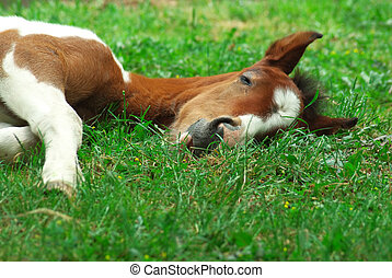 Sleeping foal. Nature composition.
