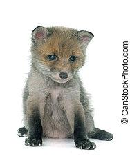 sleeping fox cub