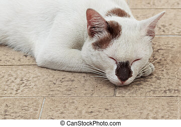 Sleeping Funny face White Cat with Black spots