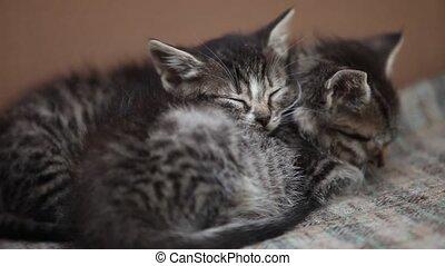 Sleeping in embrace two kitten