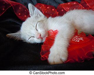 sleeping kitten and red heart - little kitten hugging red...