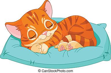 Sleeping kitten - Cute kitten sleeping on the blue pillow