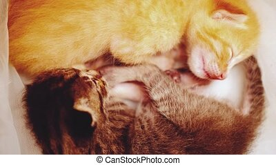 Sleeping newborn kittens - Closeup of two adorable newborn...