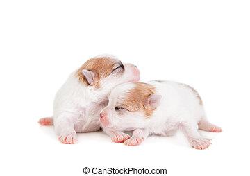 Sleeping Newborn Puppy on White