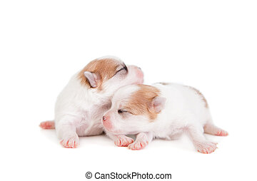 Sleeping Newborn Puppy on White