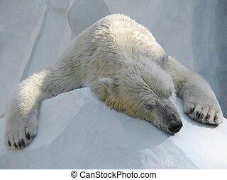 Sleeping polar bear on block of ice.