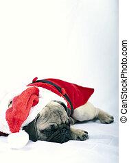Sleeping Puppy dressed as Santa