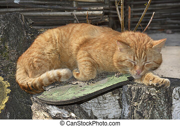 Sleeping red cat.