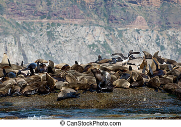 Sleeping Seals - Sleeping and Relaxing Seals next to Birds...