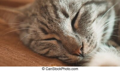 Sleeping striped tomcat cat perfect dream. cat sleeping in...