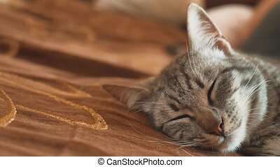Sleeping striped tomcat cat perfect dream. lifestyle cat...