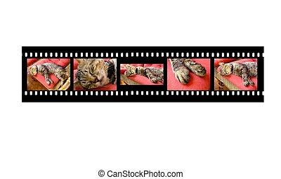 Sleepy Cat Filmstrip