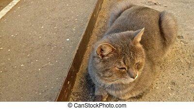 Sleepy cat resting in sun light on concrete slab