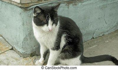 Sleepy cat sitting at the house corner outside - Sleepy cat...