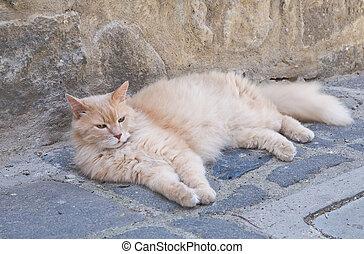 Sleepy cat.