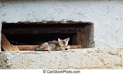 Sleepy cute kitty near ground floor window