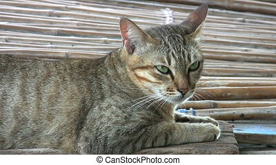 Sleepy Green Eyed Slum Cat - A sleepy green eyed cat wakes...
