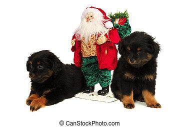 Sleepy Puppy Dogs with Santa