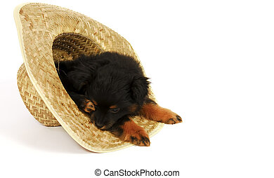 Sleepy Puppy in Cowboy Hat