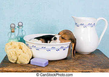 Sleepy puppy in wash basin