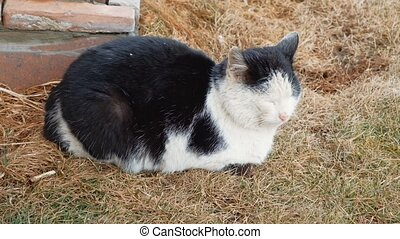Sleepy Street Cat On Dry Grass