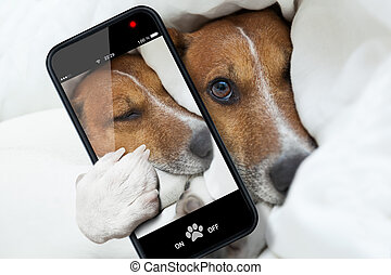sleepyhead selfie dog - sleepyhead dog taking a selfie while...