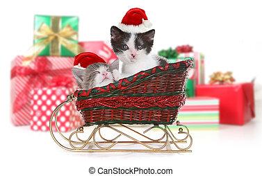sleigh, söt, jul, jultomten, kattungar