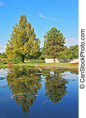 Slender trees are reflected in the pond