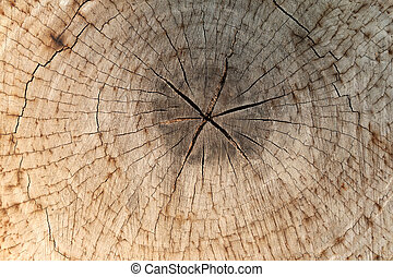 slice from a fir tree of old wood texture. - slice from a...
