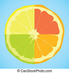 sliced citrus - Beauty sliced vector citrus on blue ...