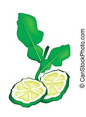 Sliced Kaffir Lime Fruit on White Background - Vegetable and...