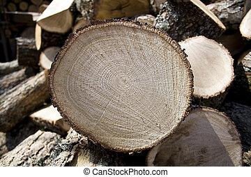 Sliced oak fire wood