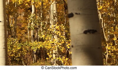 slide rail shot in yellow Aspen Grove