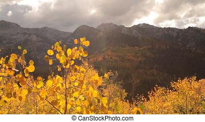 slide rail shot of yellow aspens and rugged mountain peaks