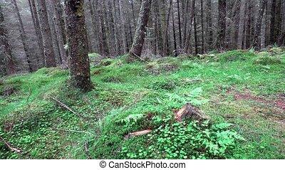 Slider shot in the forest of the scottish highlands