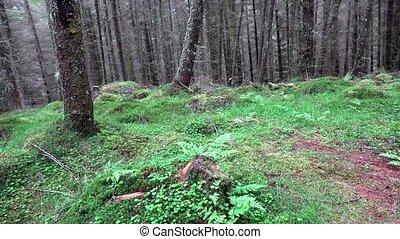 Slider shot in the forest of the scottish highlands, uk