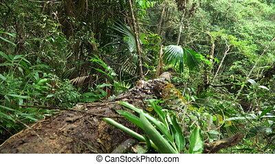 Evergreen forest landscape at Khao Yai national park -...