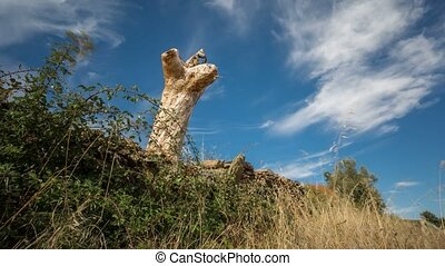 Sliding camera time lapse with dead tree trunk - Wide angle...