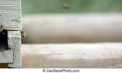 Sliding How of Bee Hive Entry - Bees enter a wooden...