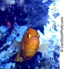 Slight Resemblance To Nemo??? - This is a head on view of...
