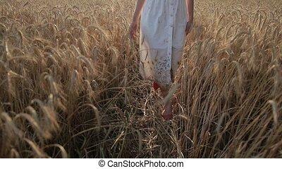 Slim female legs walking in ripe wheat field